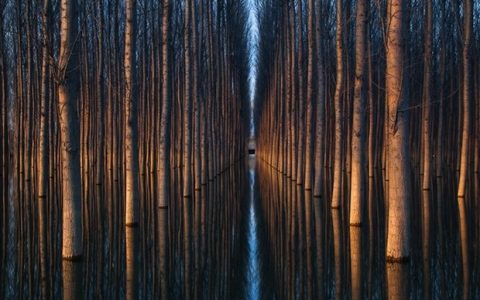 Rows of Symmetrical Trees