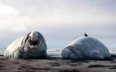 Γιατί μαλώνουν οι θαλάσσιοι ελέφαντες;