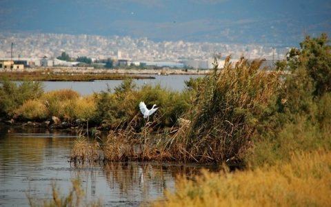 Πώληση 151.483 τ.μ. υδροβιότοπου στη Θεσσαλονίκη