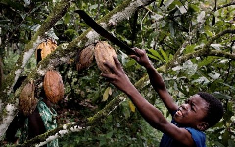 Ιθαγενείς καλλιεργητές κακάο δοκιμάζουν σοκολάτα