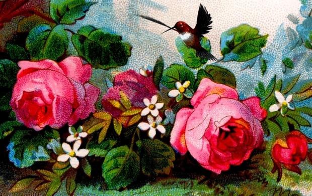 Το αηδόνι και το τριαντάφυλλο, Oscar Wilde