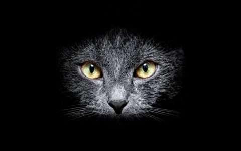 Κοιτάμε όλοι την ίδια γάτα;
