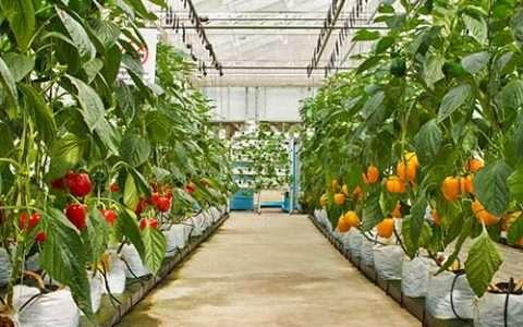 Κατεβάστε: 45 δωρεάν βιβλία για τις καλλιέργειες (λαχανικά, βότανα, δέντρα)