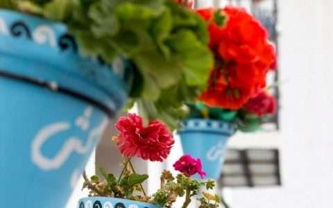 10 πανέμορφα φυτά για ζαρντινιέρες που ομορφαίνουν το μπαλκόνι!