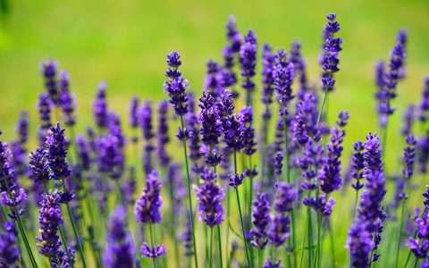 9 θαυματουργά φυτά που διώχνουν τα κουνούπια!