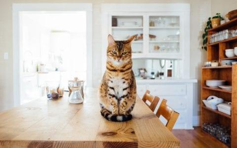 3 DIY καθαριστικά με λεμόνι για καθαριότητα στην κουζίνα