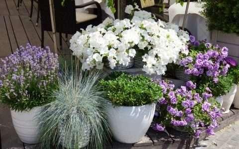 7 υπέροχα μυρωδικά φυτά για ένα μπαλκόνι γεμάτο αρώματα!