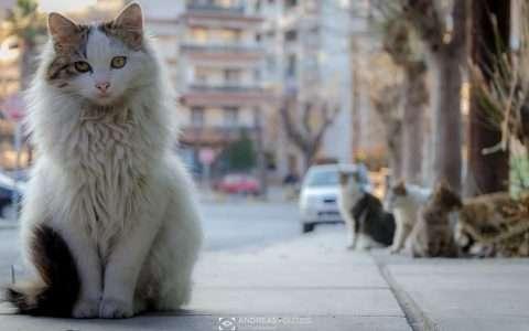 """Πανέμορφες """"Θεσσαλονικιές"""" γάτες!"""