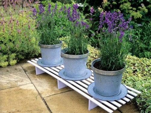 6 λουλούδια εξωτερικού χώρου ανθεκτικά για το χειμωνιάτικο μπαλκόνι σου!