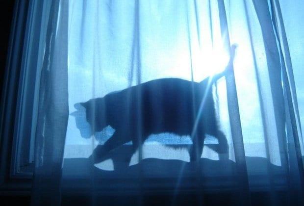 Μαύρη γάτα, από τη Βασιλεία Παπαδημητρίου