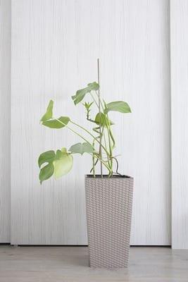 10 «βολικά» φυτά που δεν χρειάζονται πολύ νερό για να επιβιώσουν!