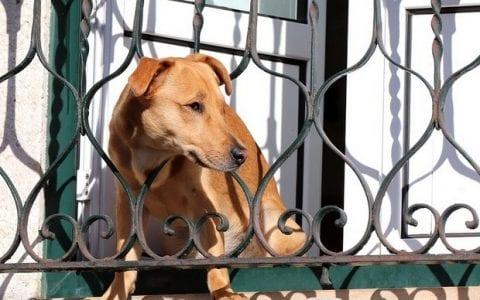 Ένας σκύλος γαβγίζει στο μπαλκόνι, από τη Γιάννα Βήτα