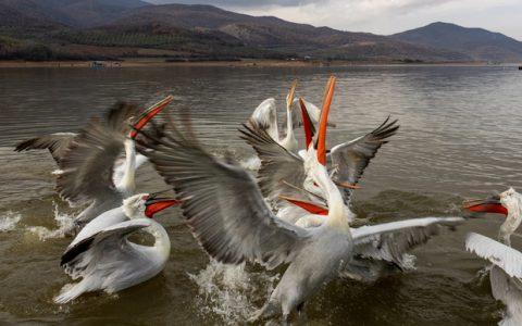 Η λίμνη Κερκίνη και τα πέριξ