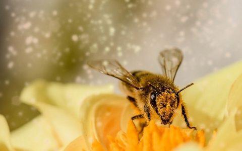 Πρόπολη, το αντιβιοτικό της μέλισσας...