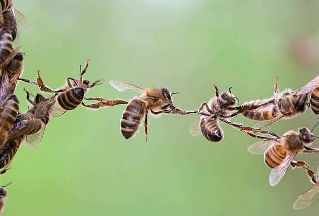 Μαθήματα ζωής από την κοινωνία των μελισσών!