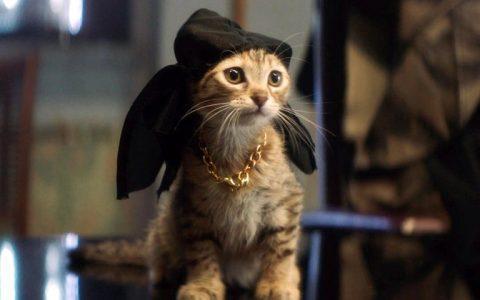 Οι 17 πιο γνωστές γάτες στην ιστορία του κινηματογράφου