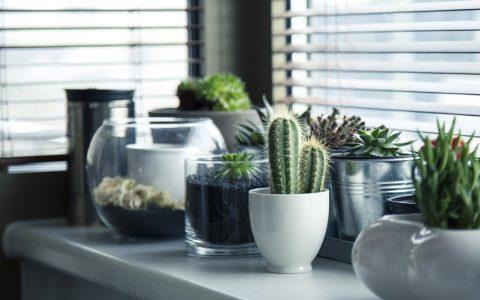 20 ιδέες για να διακοσμήσεις το σπίτι σου με φυτά