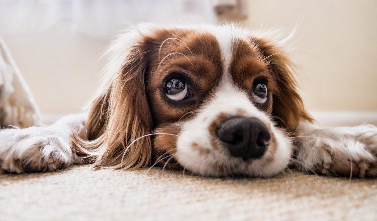 """Όταν πρόκειται για σκύλους, δεν πρέπει να λεγόμαστε """"ιδιοκτήτες"""""""