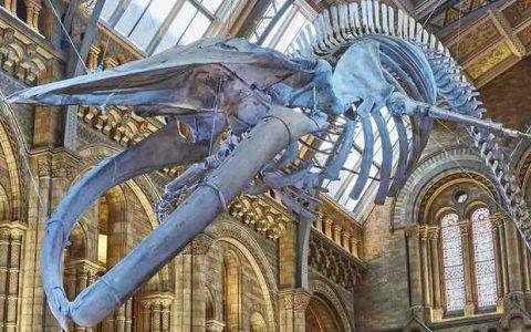 Επισκεφτείτε ψηφιακά το Μουσείο Φυσικής Ιστορίας στο Λονδίνο από το σπίτι σας!