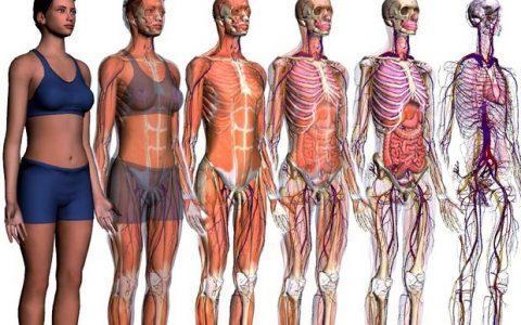 Εξερευνήστε την ανατομία του σώματος και μάθετε που βρίσκεται το κάθε όργανο!
