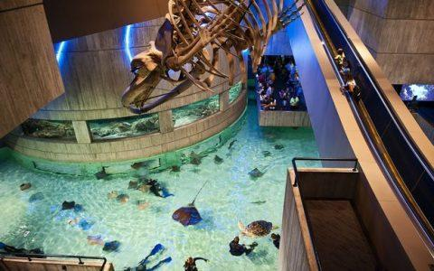 Ψηφιακή βόλτα στους μεγαλύτερους Ζωολογικούς Κήπους, Ενυδρεία και Θεματικά Πάρκα του κόσμου!