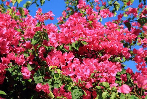 9 αγαπημένα λουλούδια για μπαλκόνι με ήλιο!