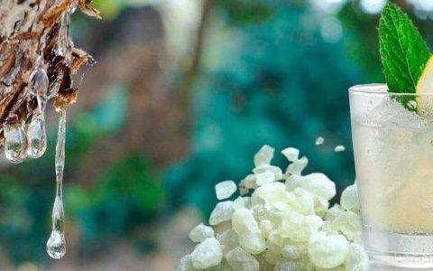 Μαστίχα Χίου: το «πολύτιμο δάκρυ» της φύσης