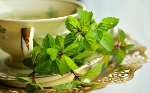 Μέντα: το αρωματικό βότανο με τις χίλιες χρήσεις