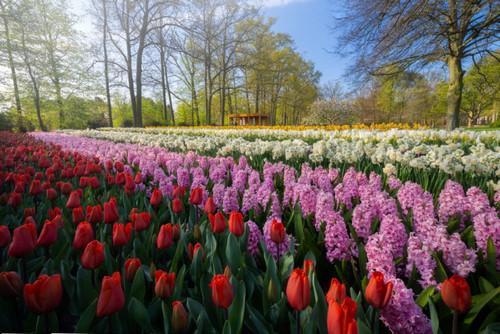 Keukenhof: Ο πιο όμορφος ανοιξιάτικος Κήπος της Ευρώπης!