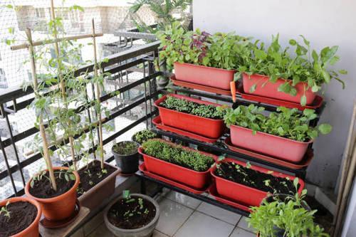 Πώς να ξεκινήσετε έναν λαχανόκηπο στο μπαλκόνι σας!