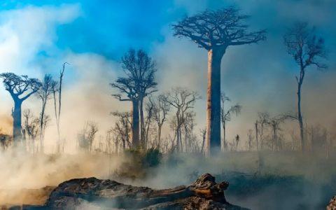 Ντέιβιντ Ατένμπορο: η Ζωή στον Πλανήτη μας (2020)